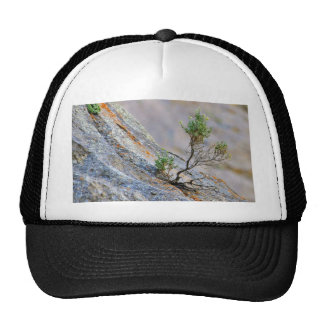 Bushes 3 trucker hat