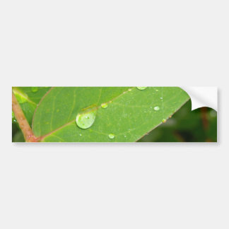 Bushes in Rain Drops Bumper Sticker