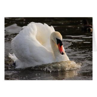 Busking Swan Greeting Card
