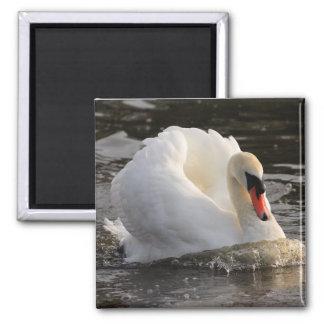 Busking Swan Fridge Magnets