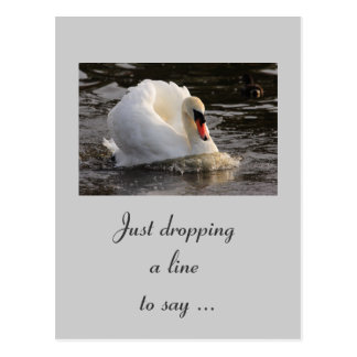 Busking Swan Postcard