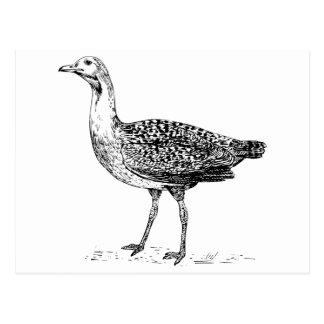 Bustard Bird Sketch Postcard