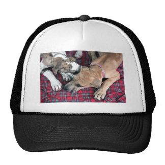 buster and jade 4 mesh hats