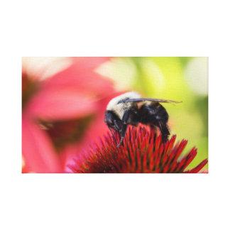 Busy Bee on a Echinacea purpurea Pow Wow Canvas Canvas Print