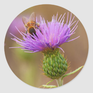 Busy Bee on Purple Thistle Photo Classic Round Sticker