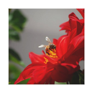 Busy Bee on Red Dahlia Canvas Canvas Prints