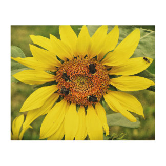 "Busy Bee's Sunflower 10""x8"" Wood Wall Art"