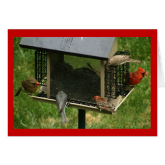 Busy Bird Feeder Card