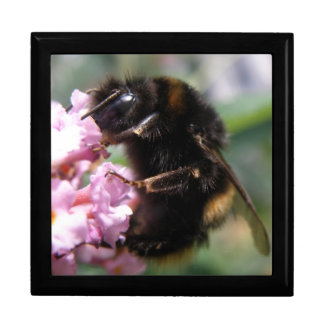 Busy Bumblebee and Pink Flowers Gift Box