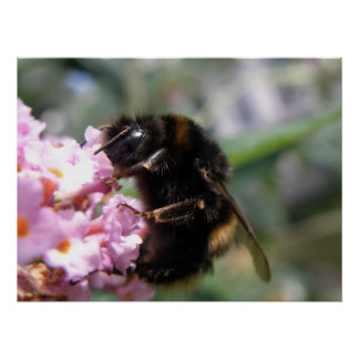 Busy Bumblebee and Pink Flowers Print