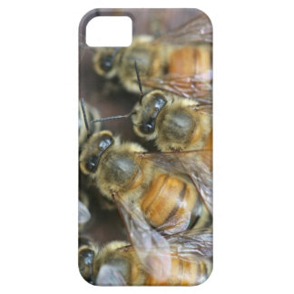 Busy honey bees iPhone 5 covers