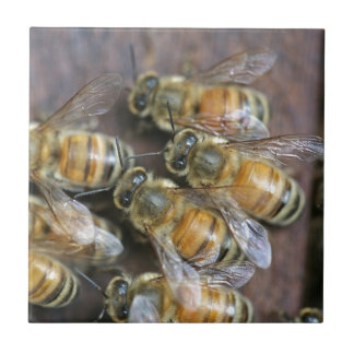 Busy honey bees tile
