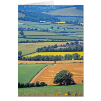 Butser Hill card