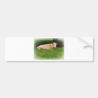 Buttercup Bumper Sticker
