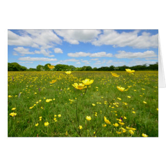 Buttercups in English Meadow Card