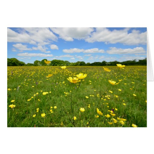 Buttercups in English Meadow Cards