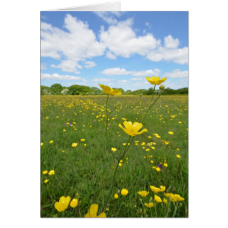 Buttercups in Meadow Card