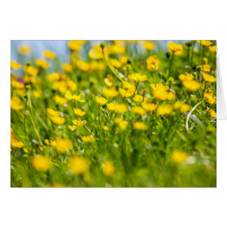 Buttercups in motion. card