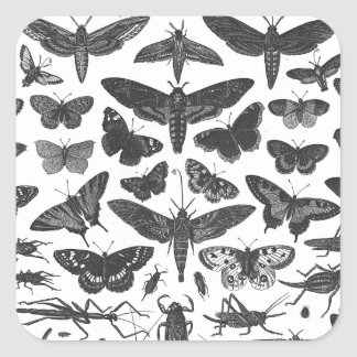 Butterfiles moths and insects B&W pattern picture Square Sticker