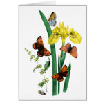Butterflies and Yellow Iris Greeting Cards