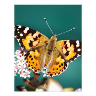 Butterflies are free 21.5 cm x 28 cm flyer