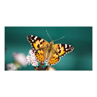Butterflies are free photo greeting card