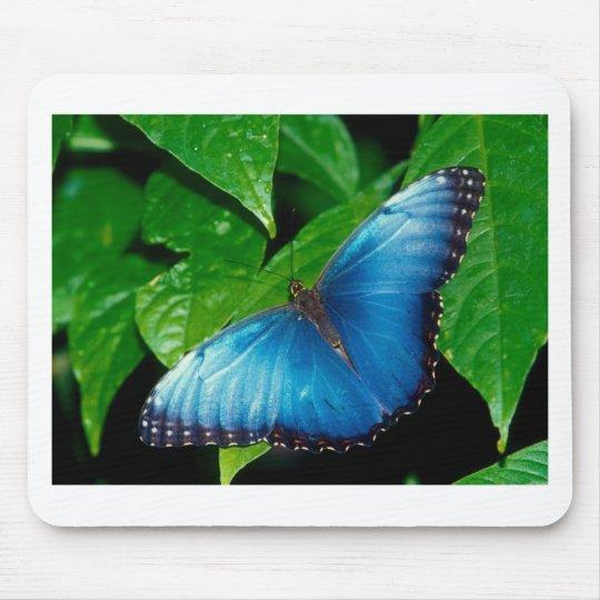 butterflies blue morpho mouse mat