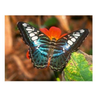 butterflies clipper postcard