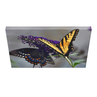 Butterflies Doubles on a Purple Butterfly Bush Canvas Print