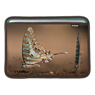Butterflies Drinking Water, Close-Up, Punda MacBook Sleeve