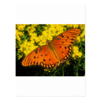 butterflies gulf fritillary postcard