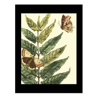 Butterflies & Leaves with Black Frame Postcard