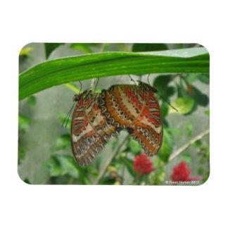 Butterflies mating magnet