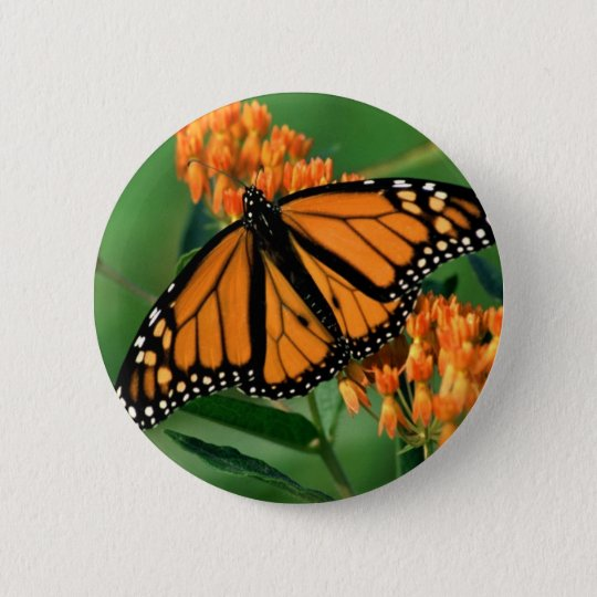 butterflies monarch butterfly 6 cm round badge