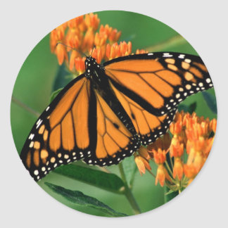 butterflies monarch butterfly classic round sticker