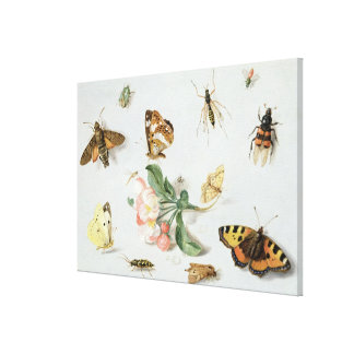 Butterflies, moths and other insects gallery wrapped canvas