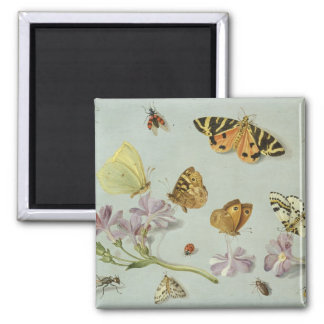 Butterflies, moths and other insects magnet
