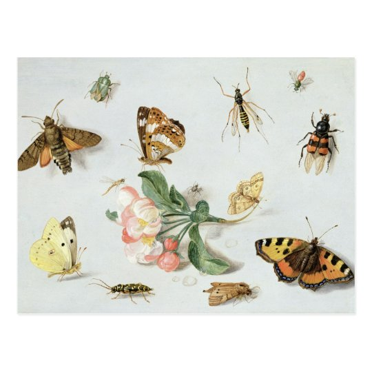 Butterflies, moths and other insects postcard