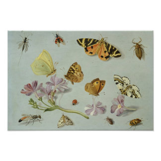 Butterflies, moths and other insects poster