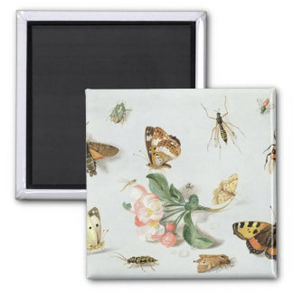 Butterflies, moths and other insects square magnet