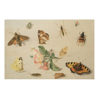 Butterflies, moths and other insects wood prints