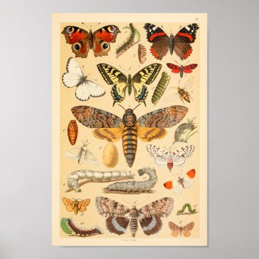 Butterflies Moths Caterpillar Collection Art Print
