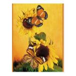 Butterflies of Summer 1