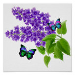 Butterflies on Lilac Flowers Poster