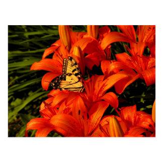 Butterflies on Tiger Lilies Postcard