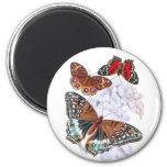 Butterflies - Orange and Brown Fridge Magnets