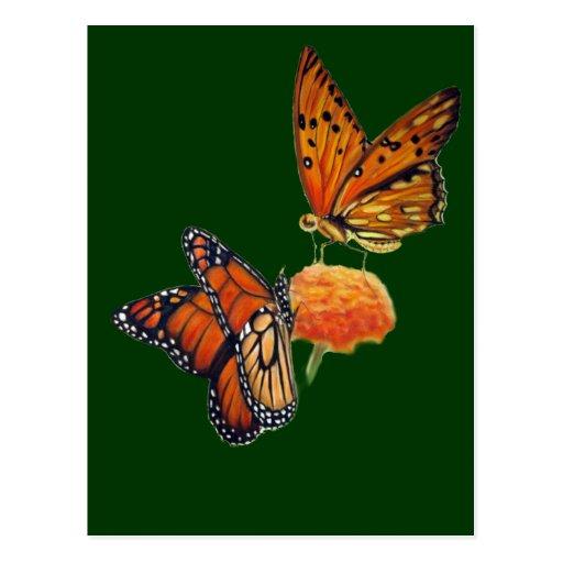 Butterflies Pastel Painting Post Card