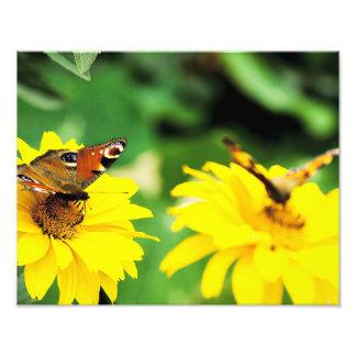 Butterflies - Photo