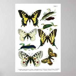 """Butterflies Plate I 24"""" x 36"""" Poster"""