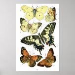Butterflies Posters